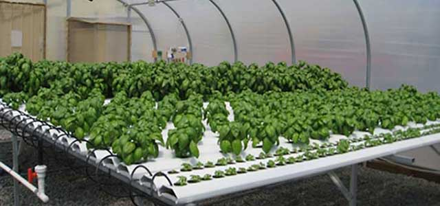Commercial AM Hydroponic Systems
