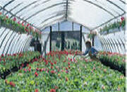 Polyethylene Films for Greenhouse Covering-Tufflite Greenhouse Poly Films