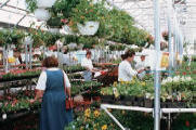 Commercial Greenhouse -Retail Greenhouses