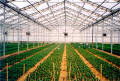 Retractable Roof Greenhouses