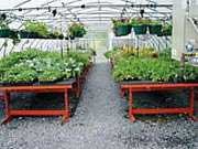 A-V Rolling Greenhouse Benches