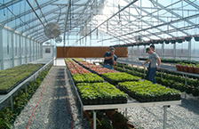 Institutional & School Greenhouse