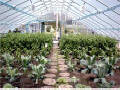 "Solar star Small ""Gothic"" Greenhouses"