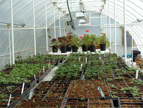 Solexx Greenhouse Covering Gothic Arch Greenhouses