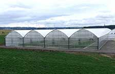 Superstar Greenhouse 3000 Gothic Arch Greenhouses