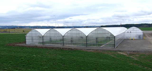 Superstar Greenhouse 3600 Gothic Arch Greenhouses